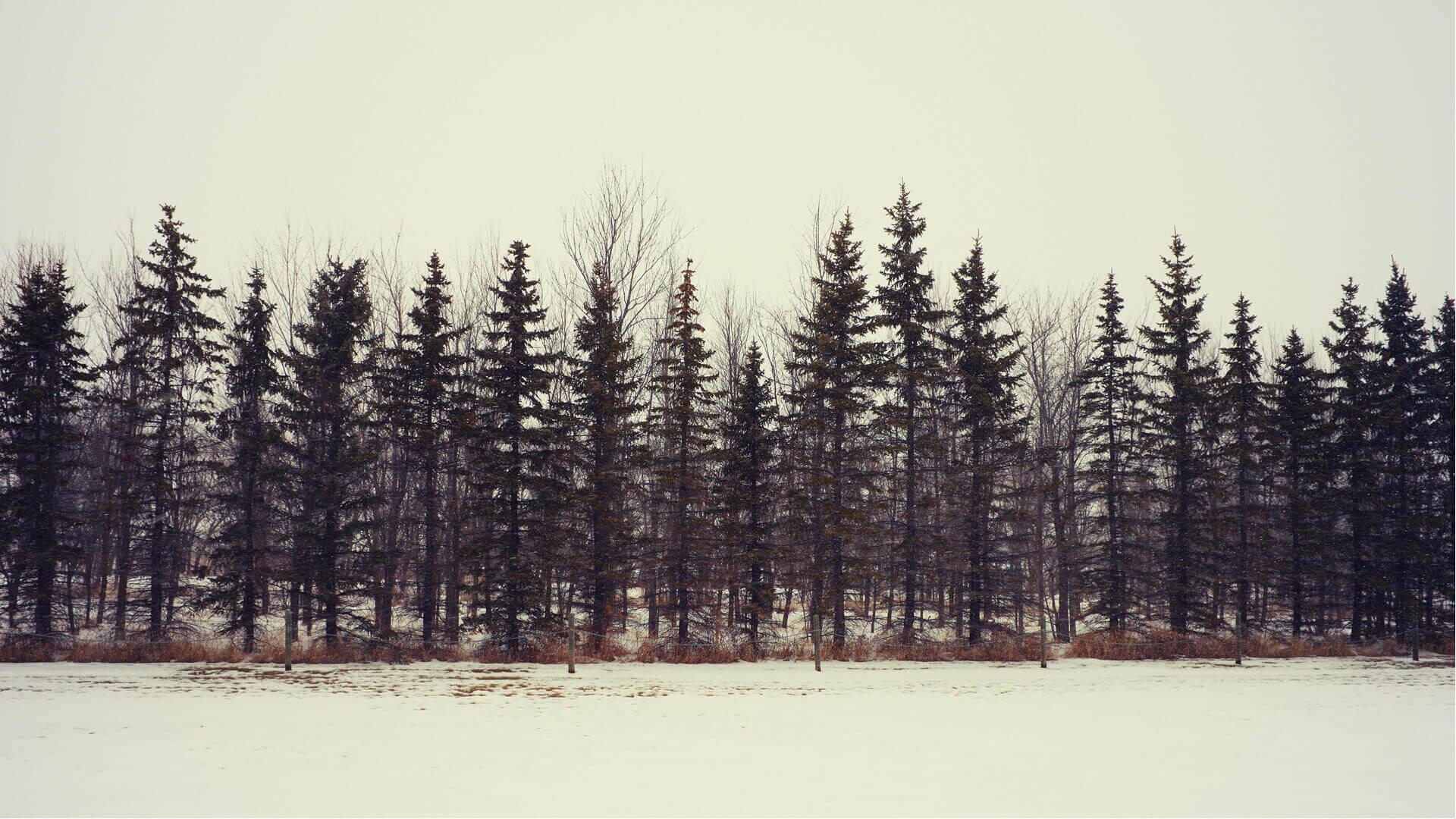 Paisaje en invierno con nieve
