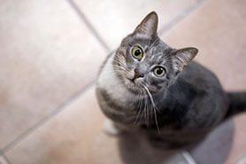Fotografía profesional para mascotas