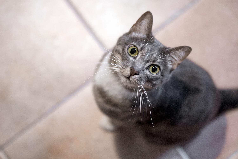 Sesión fotográfica para gatos en Barcelona