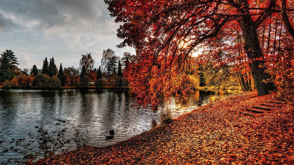 Fotografía con colores de otoño