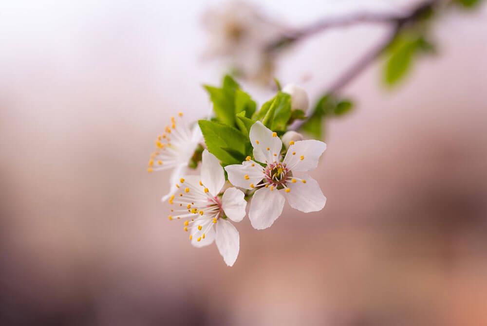 Fotografía de una flor con profundidad de campo