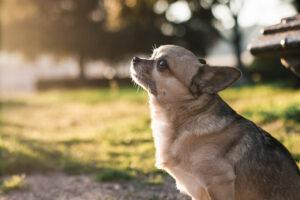 Fotógrafo de perros en Granollers